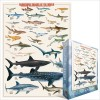 Dangerous Sharks of the World Puzzle 1000 pc