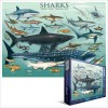 Sharks Puzzle 1000 pc